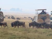 TZ-Ngorongoro