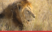 Safariresor till Africa